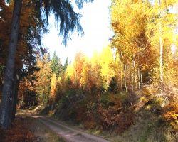 HerbstSilke